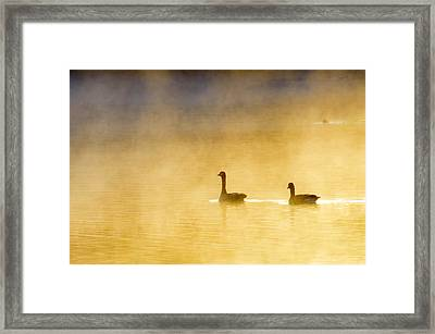 Two Geese Framed Print by Tommytechno Sweden