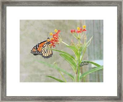 Two Generations Framed Print