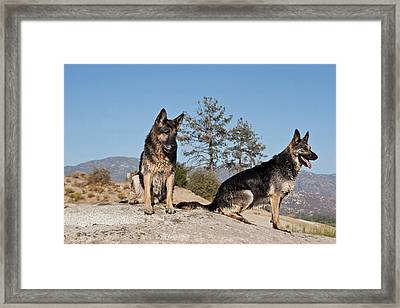 Two German Shepherds Sitting On A Rock Framed Print by Zandria Muench Beraldo
