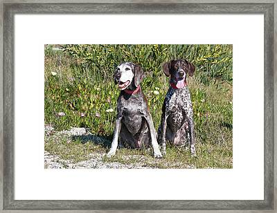 Two German Shorthaired Pointers Sitting Framed Print by Zandria Muench Beraldo