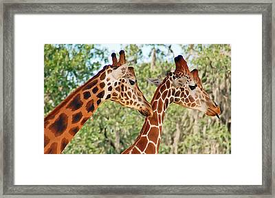 Two Giraffes Framed Print by Aimee L Maher Photography and Art Visit ALMGallerydotcom