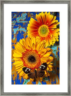 Two Golden Mums With Butterfly Framed Print by Garry Gay