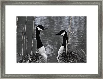 Two Goose Tango Framed Print by Mary Zeman