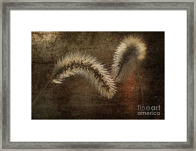 Two Grass Flowers Framed Print by Heiko Koehrer-Wagner