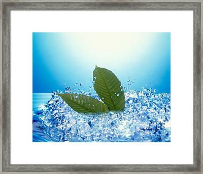 Two Green Leaves In Bubbling Water Framed Print by Panoramic Images