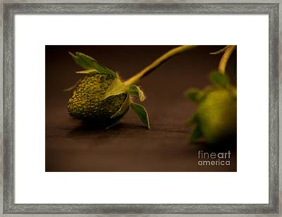Two Green Strawberries Framed Print by Patricia Bainter