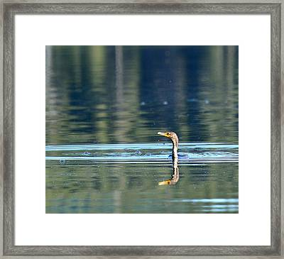 Two Headed Cormorant Framed Print by Rich Rauenzahn