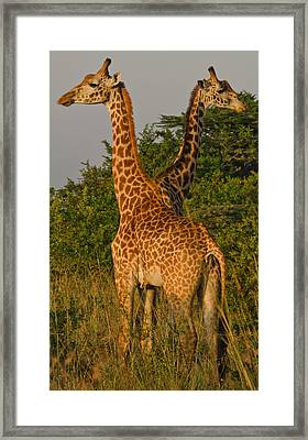 Two Heads Are Better Than One Framed Print by Aaron Bedell