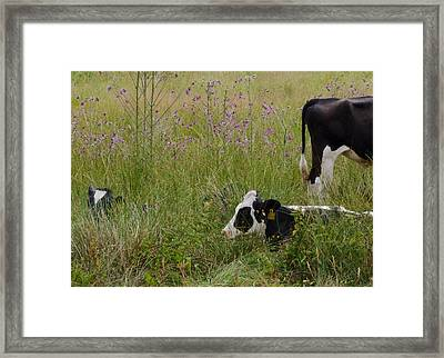 Two Heads One Tail Framed Print by Odd Jeppesen