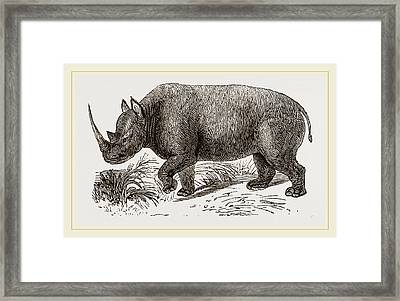 Two-horned Rhinoceros Framed Print by Litz Collection