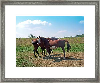 Two Horses Framed Print by Aimee L Maher Photography and Art Visit ALMGallerydotcom