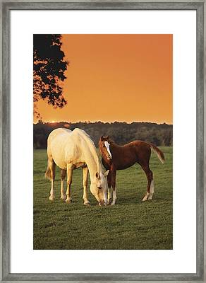 Two Horses And Sunset Framed Print by Greg Cuddiford