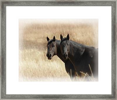 Two Horses Framed Print by Ernie Echols