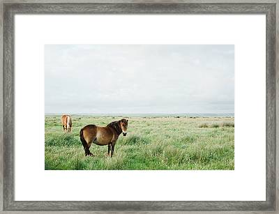 Two Horses In Field Framed Print by Suzanne Marshall