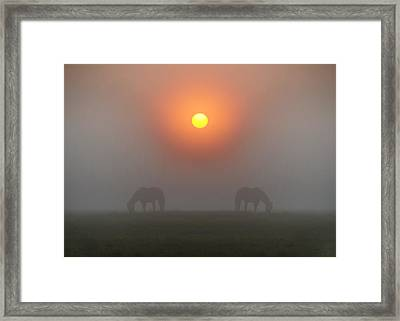 Two Horses In The Foggy Sun Framed Print