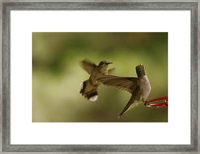 Two Hummers At The Drinking Well Framed Print by Jeff Swan