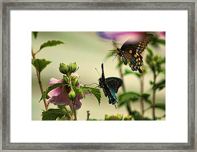 Two In Flight Framed Print