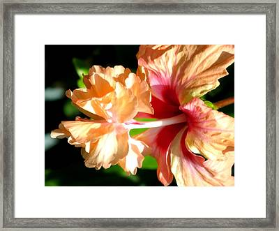 Two In One Framed Print by Zina Stromberg