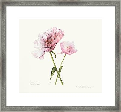 Two In Pink Framed Print