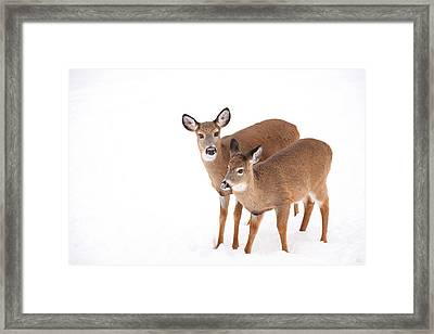 Two In The Snow Framed Print by Karol Livote