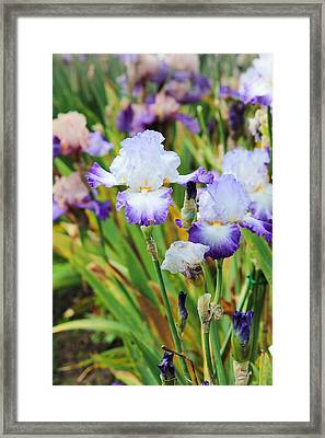Framed Print featuring the photograph Two Iris by Patricia Babbitt