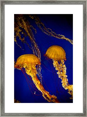 Two Jellyfish Framed Print by Jessica Berlin