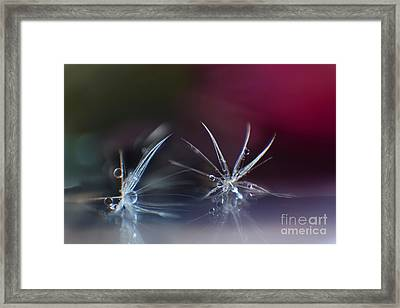 Two Jewels Framed Print by Eden Baed