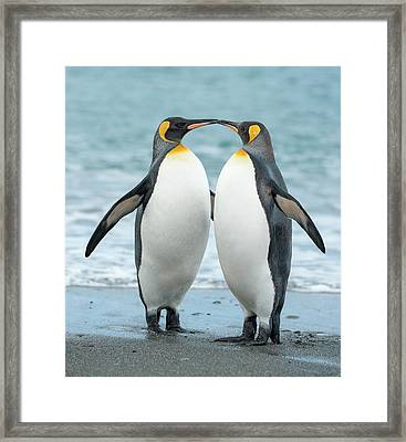 Two King Penguins On A Beach In South Framed Print by Elmvilla