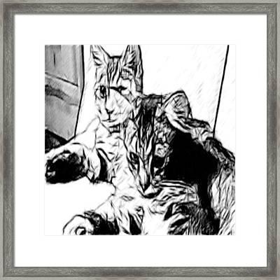 Two Kittens Framed Print