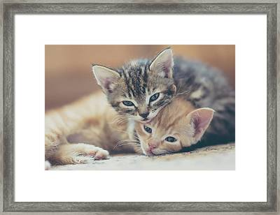 Two Kittens Looking At The Camera Framed Print by Harpazo hope