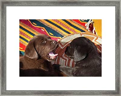Two Labrador Retriever Puppies Framed Print by Zandria Muench Beraldo