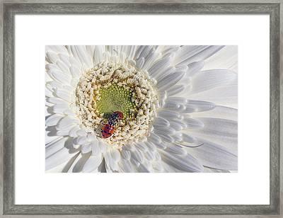 Two Ladybugs Meet Framed Print