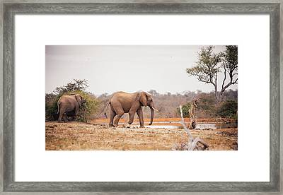 Two Large Elephants Approaching A Framed Print by Wundervisuals