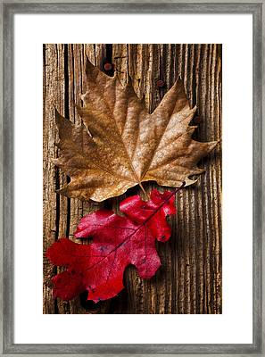 Two Leafs  Framed Print by Garry Gay