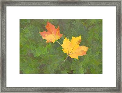 Two Leafs In Autumn Framed Print by Indiana Zuckerman