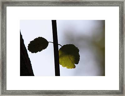 Two Leaves Framed Print by Ulrich Kunst And Bettina Scheidulin