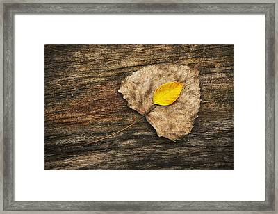 Two Leaves  Framed Print