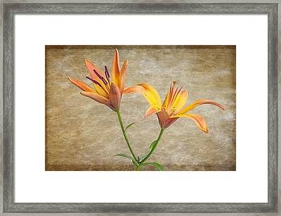 Two Lilies Framed Print