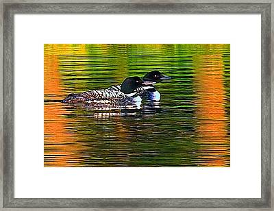 Two Loons Framed Print by Pat Now