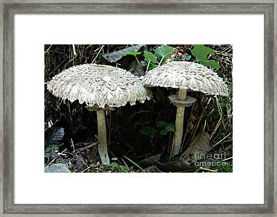 Two Magnificent Toadstools Framed Print by Chalet Roome-Rigdon