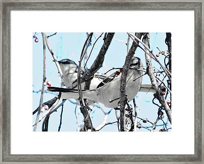 Two Mocking Birds Framed Print