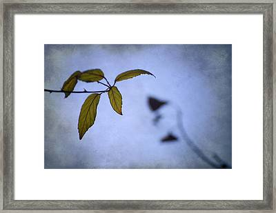 Two Monsters In The Shadows Framed Print by Guido Montanes Castillo