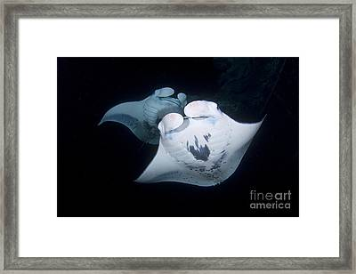 Two Night Framed Print by Aaron Whittemore