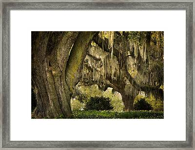 Two Oaks Framed Print