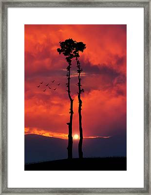Two Oaks Together In The Field At Sunset Framed Print