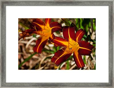 Two Of A Kind Framed Print by Don Durante Jr