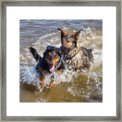 Two Of A Kind Framed Print by Nikki McInnes