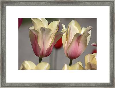 Two Of A Kind Framed Print by Steven Macanka