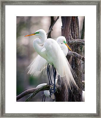 Two Of A Kind Framed Print by Tammy Smith