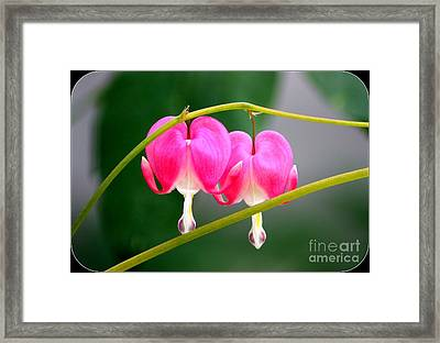 Two Of Hearts Framed Print by Patti Whitten